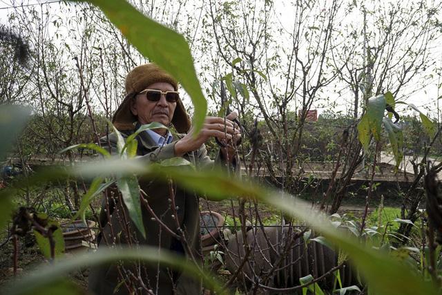Ông Nguyễn Thái Long với 60 năm kinh nghiệm trồng và bán đào