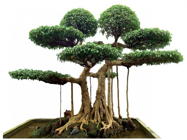 Cây cảnh tết đẹp nhất Việt Nam
