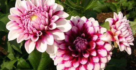 Sinh viên bán hoa tươi tế kiếm tiền