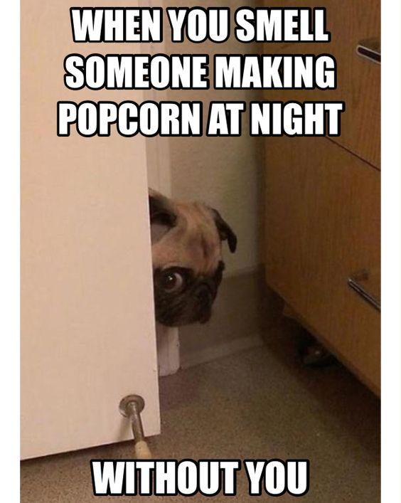 Pug: it