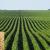 1001 ứng dụng và lợi ích của đậu nành trong cuộc sống khiến bạn bất ngờ ( phần 3)